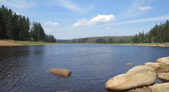 Angeln in Teichen und Seen
