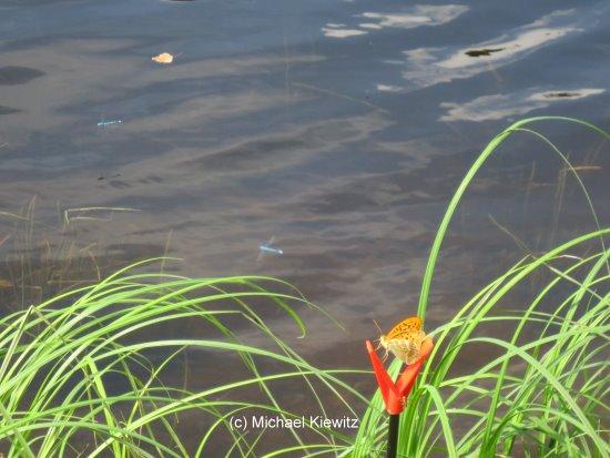 Angeln in der Oder