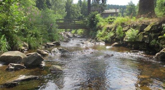 Angeln in Flüssen und Bächen